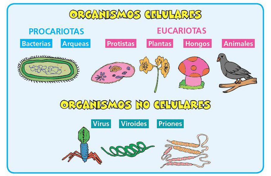 Virus Viroides Y Priones Escolar Abc Color