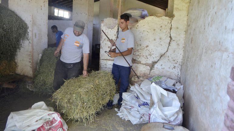 Tanto para alimentación de ganado bovino como para equinos, el uso de la alfalfa es muy interesante.