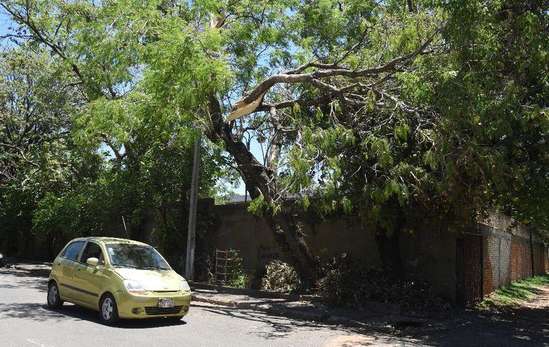 Una rama cuelga de manera peligrosa en Sargento Gauto entre Venezuela y Santa Rosa. En cualquier momento se puede caer.