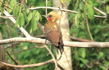 ecologia-juan-pablo-culasso-es-un-apasionado-por-los-sonidos-de-las-aves-con-el-objetivo-de-grabarlos-viajo-al-pantanal-resultado-de-esa-experienc-230255000000-1753179.jpg