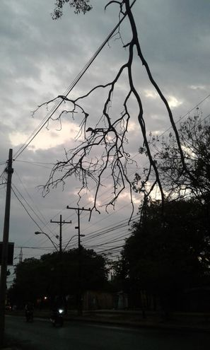 La rama puede caer y lesionar a algún transeúnte.
