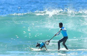 Una ola se acerca a un perro surfista y un remero en el concurso anual de surf con perros en Huntington, California.
