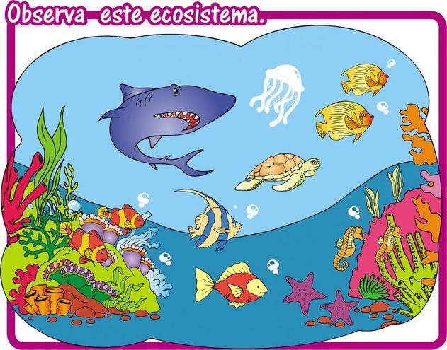 Ecosistema Acuático De Agua Salada Escolar Abc Color