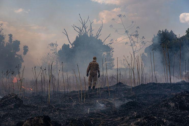 Un bombero en una zona quemada de la selva, en el estado brasileño de Matto Grosso.