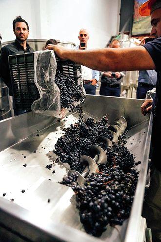 El vino que nace  en Luque