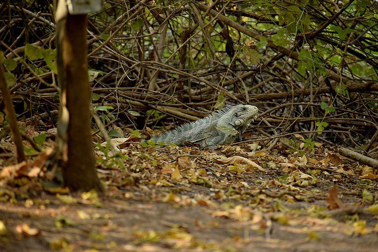 Animales silvestres en el pantanal.