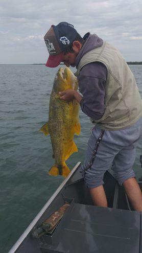 Mortandad de peces en Ayolas genera preocupación en asociaciones de pescadores.