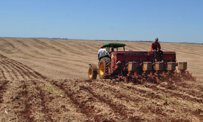El momento de siembra y densidad de plantas son partes importantes para lograr más adelante una buena cosecha de soja.