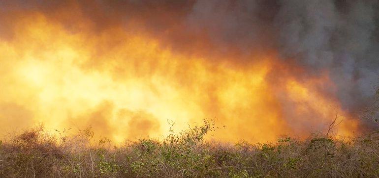 El fuego, avivado por el fuerte viento norte,   está devorando miles de hectáreas, costándoles la vida a muchos animales silvestres.
