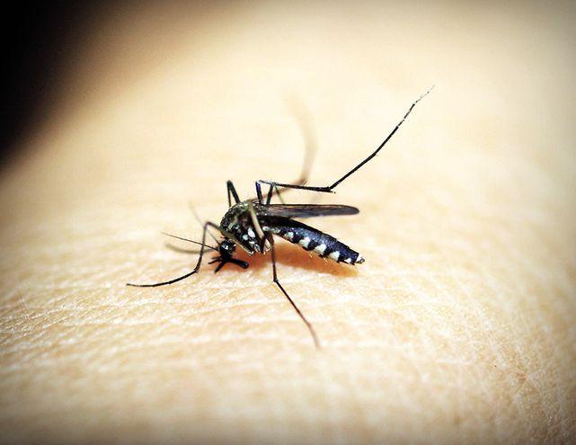 Sigue alerta por dengue