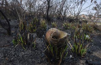 En las zonas quemadas quedaron basura y bolsas de basura, botellas, focos, estructuras de madera, cubiertas y plantas.  En las zonas quemadas quedaron basura y bolsas de basura, botellas, focos, estructuras de madera, cubiertas y plantas. En la foto, la caparazón de un caracol quemado.