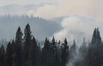 Humo entre los árboles del Bosque Nacional Fremont, en el estado de Oregon, EE.UU.