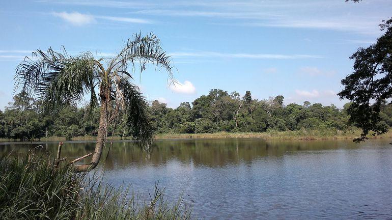 La Cámara de Senadores aprobó expropiar cinco hectáreas del bosque de la reserva del lago Yrendy.