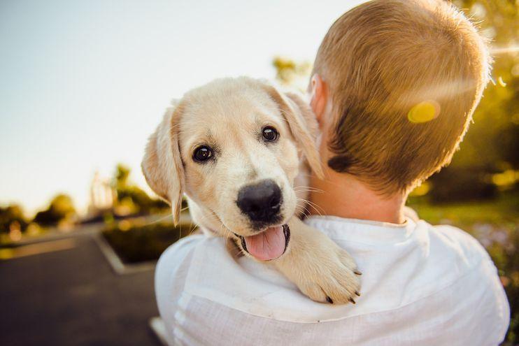 Desde el año 2004 se ha instituido la fecha para celebrar a los más fieles de la casa, los perros.