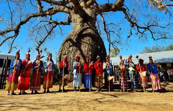 Árbol samu'u o palo borracho concursante de Los Colosos de la Tierra 2021. Su nombre cientifico es Ceiba chodatii comúnmente y este ejemplar se erige en la comunidad indígena San José Estero, departamento de Boqueron, Chaco Paraguayo, a 6 kilómetros de la frontera con Argentina.