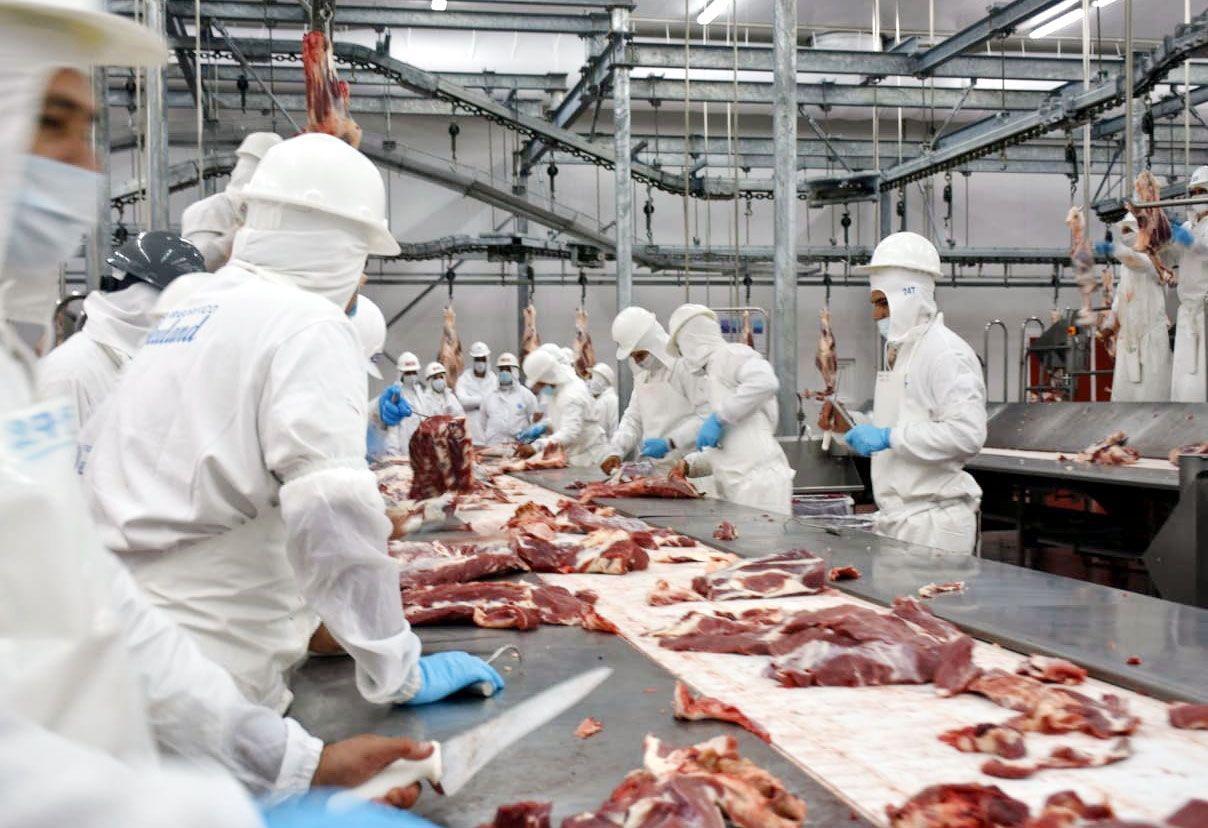 Fotografía ilustrativa del interior de un frigorífico de carne bovina,