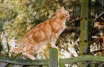 A los gatos les encanta pasearse al aire libre.
