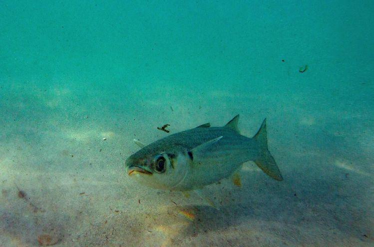 https://arc-anglerfish-arc2-prod-abccolor.s3.amazonaws.com/public/5EGKDOELHZGXDATNCNF6DRKYSQ.jpg