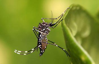 El último caso autóctono de malaria se registró en Paraguay en 2012, mientras que de fiebre amarilla se registró en el 2009.