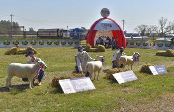 Momento de la premiación de los mejores ejemplares de ovinos de la raza Texel en la Expo Nacional de Ovinos en Mbocayaty del Guairá.
