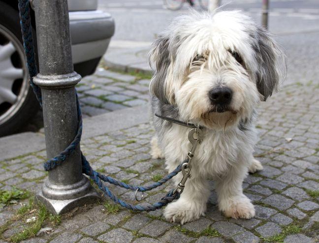 ¿Dejaste el perro fuera cuando entraste a una tienda y cuando saliste no estaba?Gritar desesperadamente no es lo mejor.