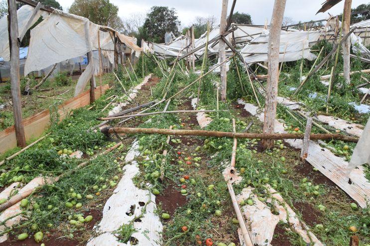Una tormenta tipo tornado arrasó con viviendas, viveros de hortalizas, árboles y otras construcciones en una zona que abarca parte del distrito de Capitán Miranda, en los alrededores de la calle D y la ruta Graneros del Sur Paraguay-Japón.