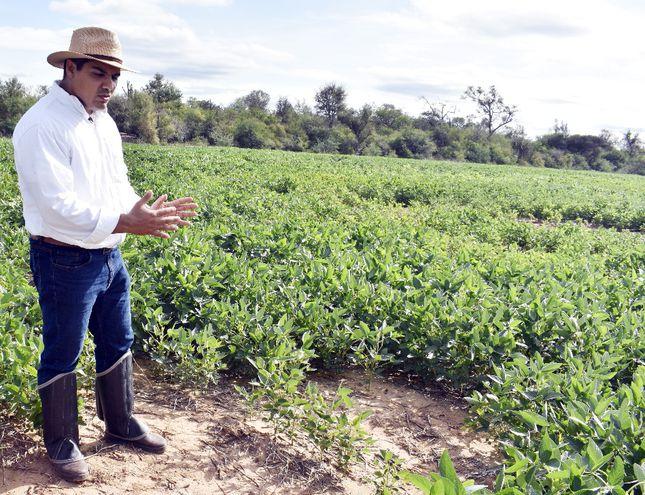 El Chaco tiene un gran potencial de desarrollo para la soja.