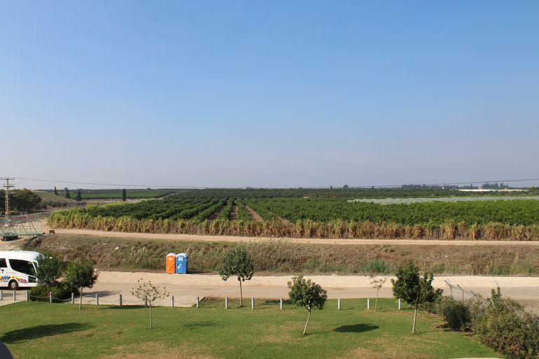 Campos de cultivo en el Valle del Jordán