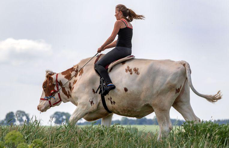 Subirse a una vaca, una forma de aprender a montar sin caballo