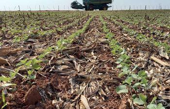 En varias zonas del país la soja ya esta emergiendo; en otras, la siembra arrancará tras el paso de las lluvias de esta semana.