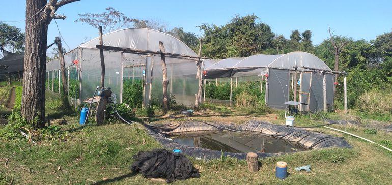 Invernadero construido en la zona de la calle Itacurubí de Coronel Oviedo. Los productores tuvieron que comprar luego los caños para la instalación del sistema de riego.