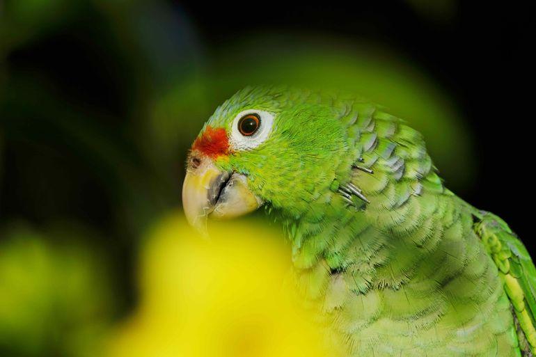 Costa Rica, vegetación, fauna