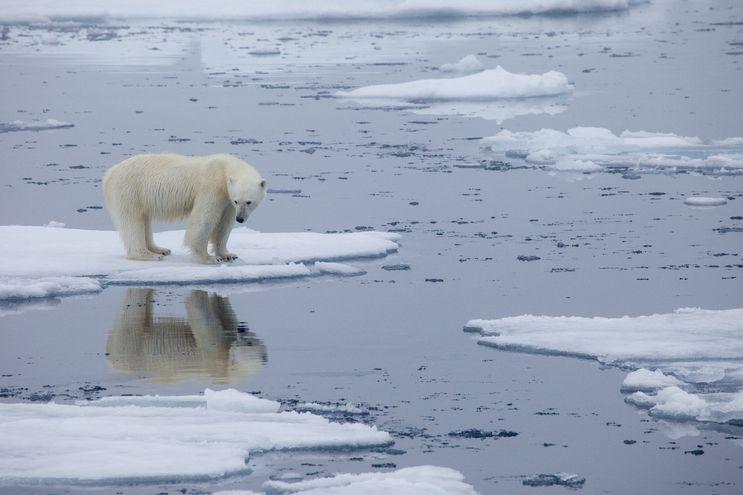 Un oso polar sobre una placa de hielo en derretimiento en Svalbard, Noruega, en julio de 2020.
