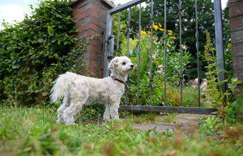 Si un perro permanece mucho tiempo solo puede volverse inseguro y entonces le ladrará a todo lo que pase frente a su verja.