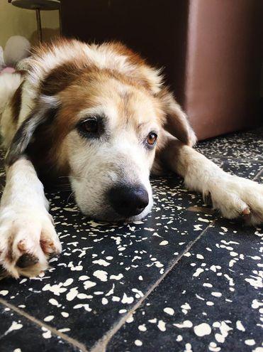 Shelby se recupera en la veterinaria