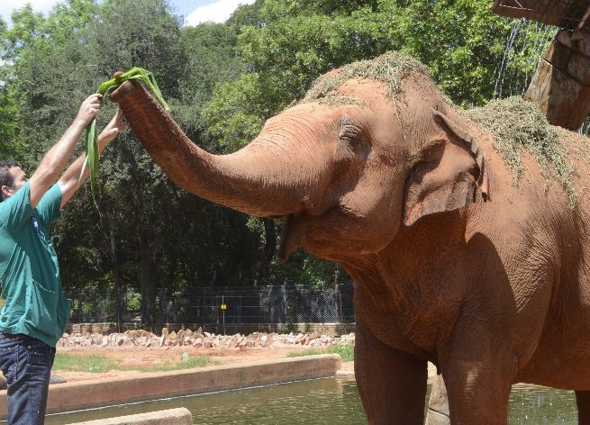 Female ♀ Asian elephant Maia at Asuncion Zoo