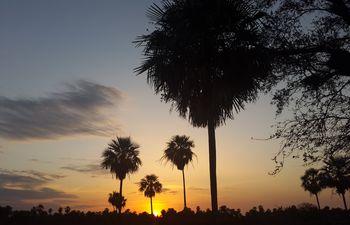 Maravilloso atardecer en los palmares del Pantanal.