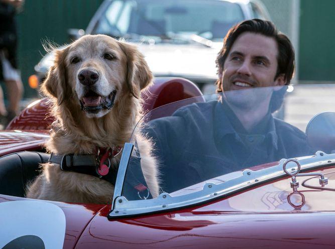 El perrito Enzo (cuya voz la hace Kevin Costner en la versión en inglés) y su dueño Denny Swift (Milo Ventimiglia).