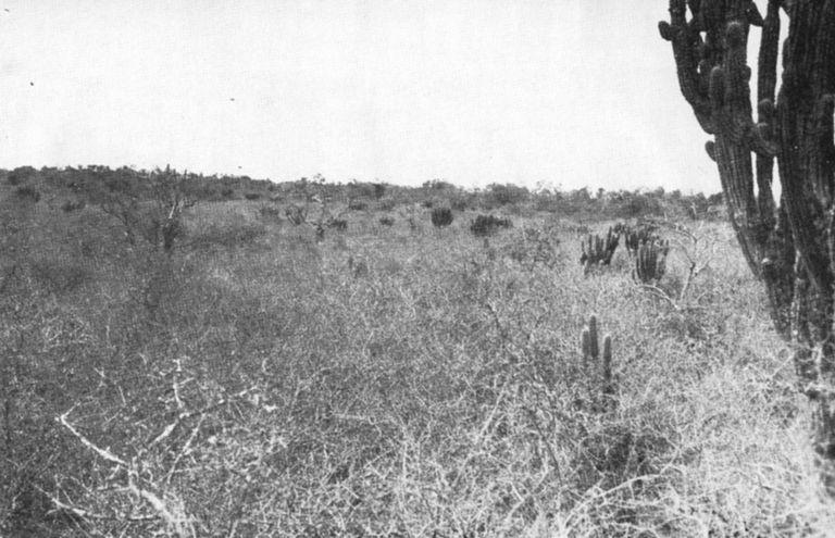 El Chaco,  escenario de la guerra librada entre Bolivia y Paraguay desde 1932 hasta 1935.