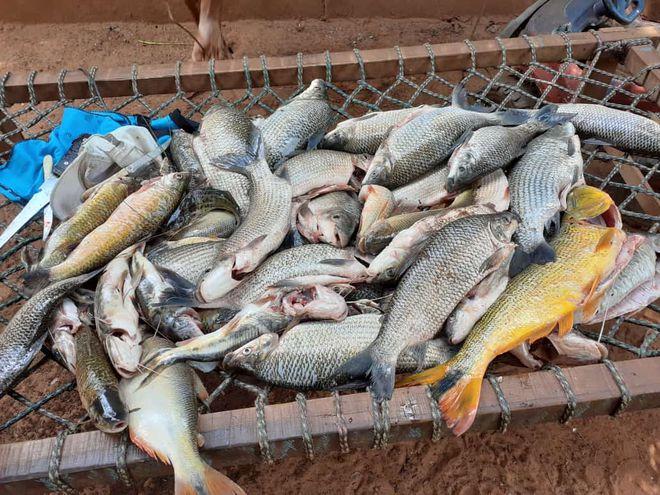 Hace unos días hubo una gran mortandad de peces en el río.