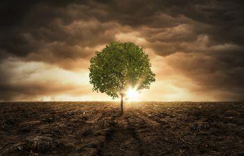 Las simbiosis ayudan a los árboles a acceder a diferentes nutrientes e influyen en la capacidad del suelo.
