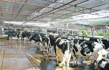 La produccion de leche en el Paraguay está teniendo un sostenido crecimento en las últimas décadas, llegando actualmente a la exportación.