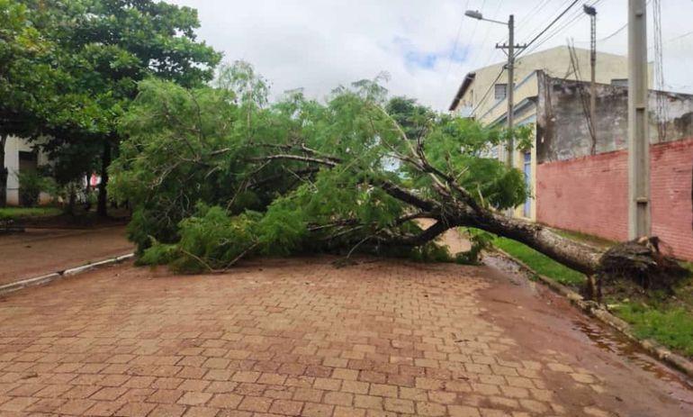Árbol ubicado en las calles Iturbe entre Mariscal López y Mariscal Estigarribia fue derribado por los fuertes vientos.