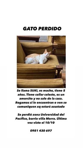 Suki, gato perdido