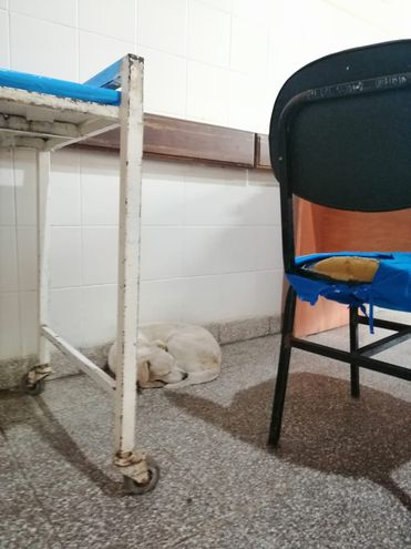 """Varios perros que acompañaron a sus dueños, quedaron abandonados en los hospitales tras fallecer sus """"humanos""""."""