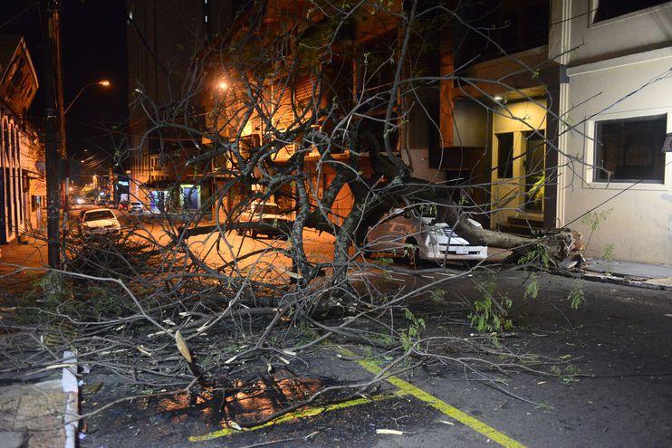 Arbol caído tras la tormenta de ayer en Yegros y Azara.