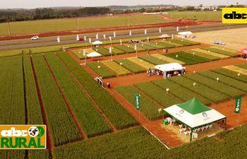 ABC Rural: Jornada de campo de Trigo de SemAgro en J.E. Estigarribia