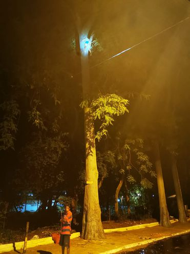 """Beto, impaciente, espera que Isabel sea rescatada. La mujer quedó """"atorada"""" en un árbol de eucalipto, a 20 metros de altura."""