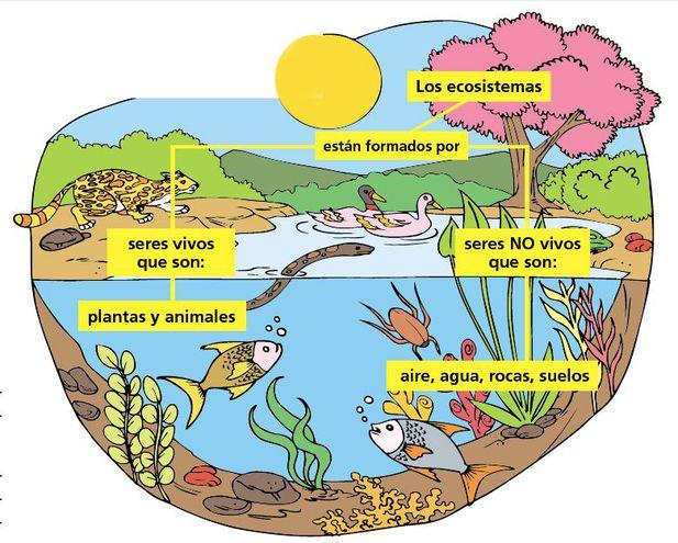 Ecosistemas Acuáticos Y Terrestres Escolar Abc Color