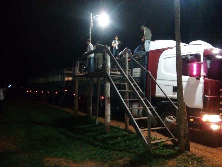 Incautan 31 vacunos y demoran a conductor en Caapucú - Nacionales - ABC Color